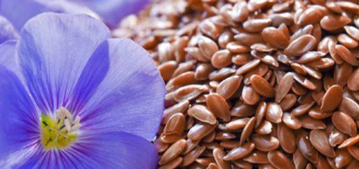 льняное масло и льняные семечки