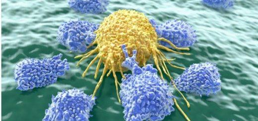 натуральные клетки киллеры