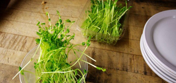 пророщенные семена брокколи